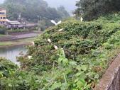 坪林鳥生態:IMG_6297.JPG