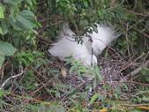 坪林鳥生態:IMG_6282.JPG