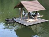 新竹綠世界生態農場:DSCF2800.jpg