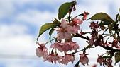 13-02-17 芬園花卉生產休憩園區:20130200265.JPG
