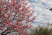 13-02-17 芬園花卉生產休憩園區:20130200266.JPG
