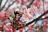 13-02-17 芬園花卉生產休憩園區:20130200269.JPG