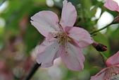 13-02-17 芬園花卉生產休憩園區:20130200275.JPG