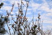13-02-17 芬園花卉生產休憩園區:20130200288.JPG