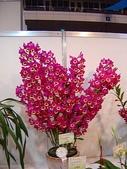 2009台北國際花卉展:2009台北國際花卉展- (46).JPG