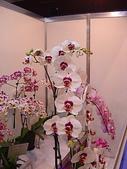 2009台北國際花卉展:2009台北國際花卉展- (50).JPG
