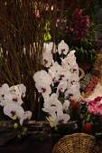20120227爭艷館-蘭藝爭輝:20120227爭艷館-蘭藝爭輝- (3).JPG