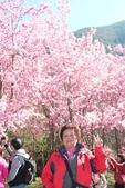 20130217武陵農場:20130217武陵農場- (178).JPG