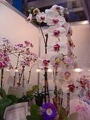 2009台北國際花卉展:2009台北國際花卉展- (52).JPG