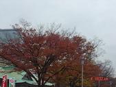 200412日本-東京、大阪:eric日本行 023.jpg