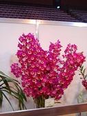 2009台北國際花卉展:2009台北國際花卉展- (45).JPG