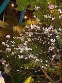 2009台北國際花卉展:2009台北國際花卉展- (153).JPG