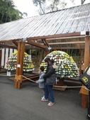 20111203士林官邸菊展:20111203士林官邸菊展-2- (18).JPG