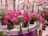 2009台北國際花卉展:2009台北國際花卉展- (49).JPG