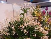 2009台北國際花卉展:2009台北國際花卉展- (35).JPG