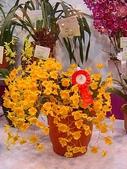 2009台北國際花卉展:2009台北國際花卉展- (47).JPG