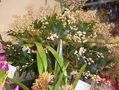 2009台北國際花卉展:2009台北國際花卉展- (36).JPG