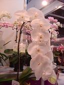 2009台北國際花卉展:2009台北國際花卉展- (48).JPG