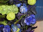 2009台北國際花卉展:2009台北國際花卉展- (138).JPG