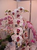 2009台北國際花卉展:2009台北國際花卉展- (51).JPG