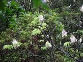 百年鐘萼木   :DSC01680 (Copy).jpg