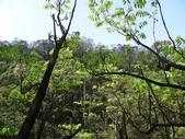 百年鐘萼木   :DSC09702 (Copy).jpg