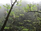 百年鐘萼木   :DSC09528 (Copy).jpg