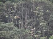 百年鐘萼木   :DSC09673.JPG