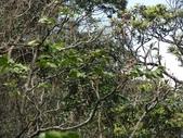 百年鐘萼木   :DSC08677 (Copy).jpg