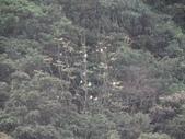 百年鐘萼木   :DSC09663.JPG