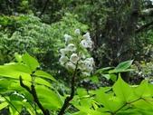 百年鐘萼木   :DSC03855 (Copy).jpg