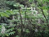 百年鐘萼木   :DSC01881 (Copy).jpg