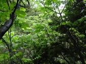 百年鐘萼木   :DSC04677 (Copy).jpg