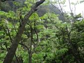 百年鐘萼木   :DSC00595 (Copy).jpg