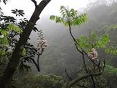 百年鐘萼木   :DSC09527 (Copy).jpg