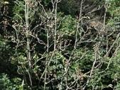 百年鐘萼木   :DSC00360.JPG