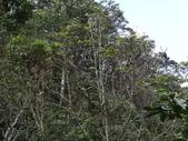 百年鐘萼木   :DSC08676 (Copy).jpg