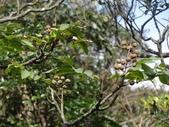百年鐘萼木   :DSC08680 (Copy).jpg