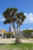 Okinawa:OKI_4539.JPG