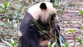 黃龍+貓熊:20141013_104803.jpg