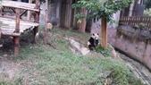 黃龍+貓熊:20141013_093737.jpg