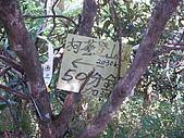 98.05.30桃園雙障之唐穗山:DSCN9159.JPG