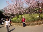 2010-2-26 陽明山花季:DSC01454.JPG