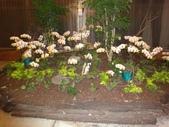 2012-02宜蘭風爭小木屋伯朗蘭花園礁溪武暖餐廳冬山河騎三輪車:DSC05405.JPG