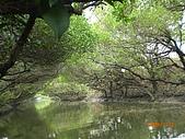 四草生態坐船遊紅樹林好多魚往船上跳台南新化兩日遊981123:CIMG4605.JPG