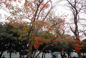 2013-01-01桃園石門賞楓賞梅:DSC01021.JPG