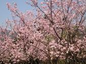 2010-2-26 陽明山花季:DSC01460.JPG