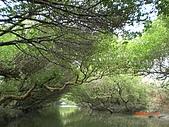 四草生態坐船遊紅樹林好多魚往船上跳台南新化兩日遊981123:CIMG4607.JPG