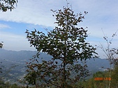 馬拉邦山98.12.8:CIMG5483.JPG