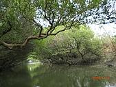 四草生態坐船遊紅樹林好多魚往船上跳台南新化兩日遊981123:CIMG4608.JPG